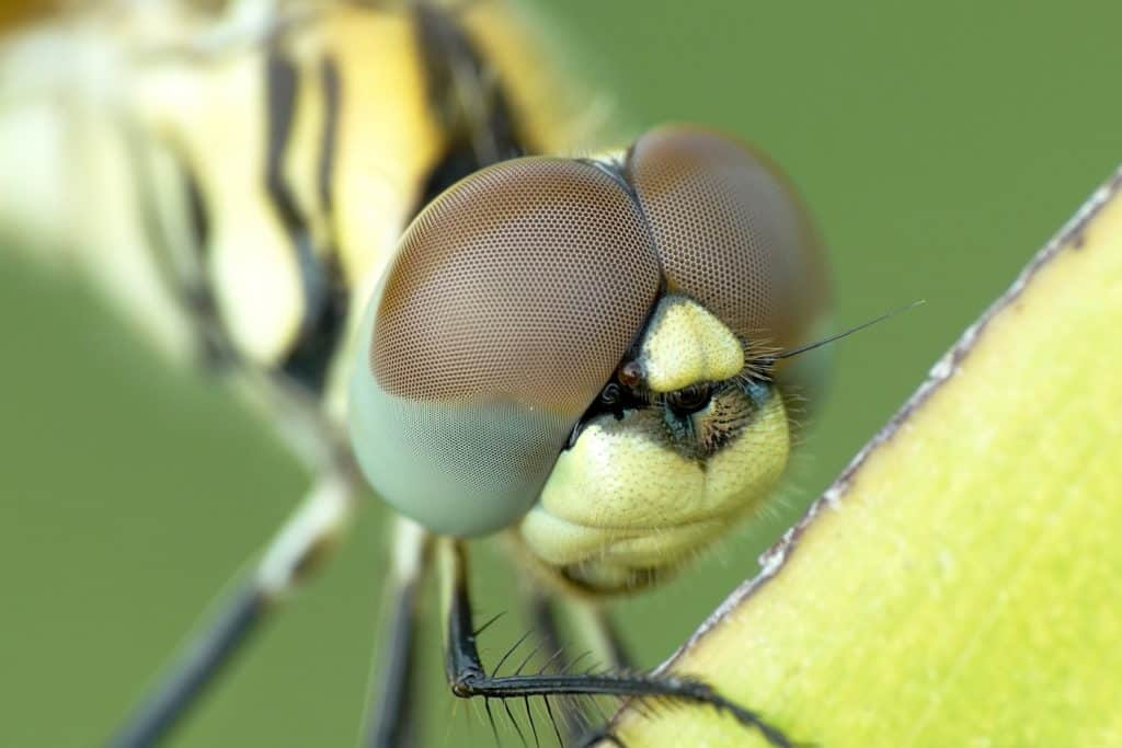 Macro Photography – Definition, Important Facts, And Technical Specs